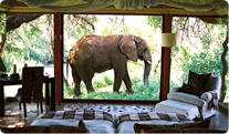 Makanyane Safari Lodge Accommodation Image