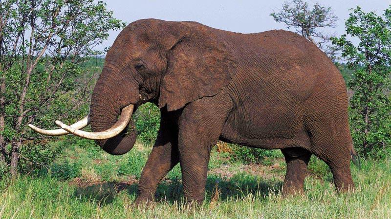 Madikwe game reserve image gallery - Image elephant ...